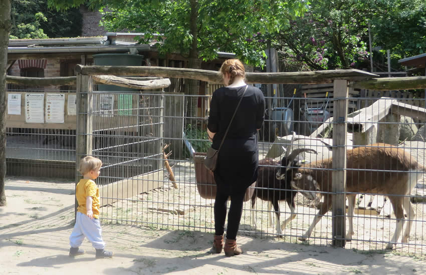 Feeding goats in the 'Ziegenhof, Charlottenburg, Berlin