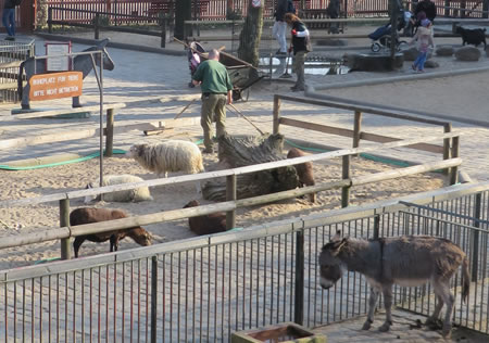 Animal petting area, Berlin zoo. See it for free!