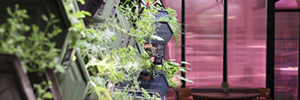 Growing its own: Berlin's Infarm cafe