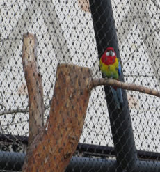 Bird aviaries, Berlin