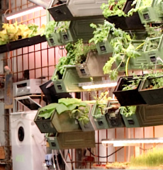 Berlin's innovative INfarm cafe, where green produce is farmed indoors