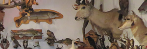 Taxidermy workshops in Berlin's Steglitz